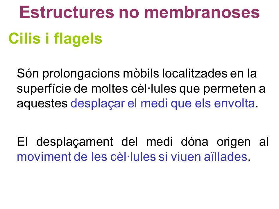 Estructures no membranoses