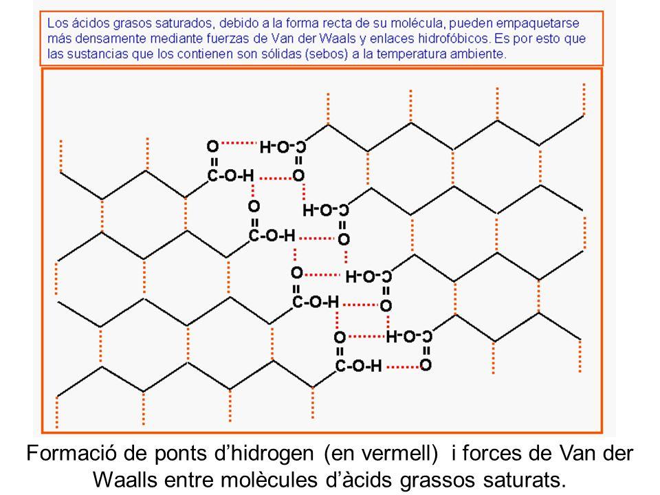 b Formació de ponts d'hidrogen (en vermell) i forces de Van der Waalls entre molècules d'àcids grassos saturats.