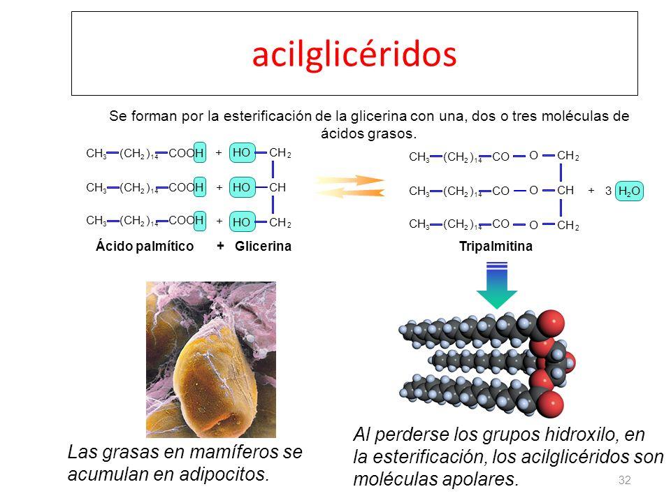 acilglicéridos Se forman por la esterificación de la glicerina con una, dos o tres moléculas de ácidos grasos.