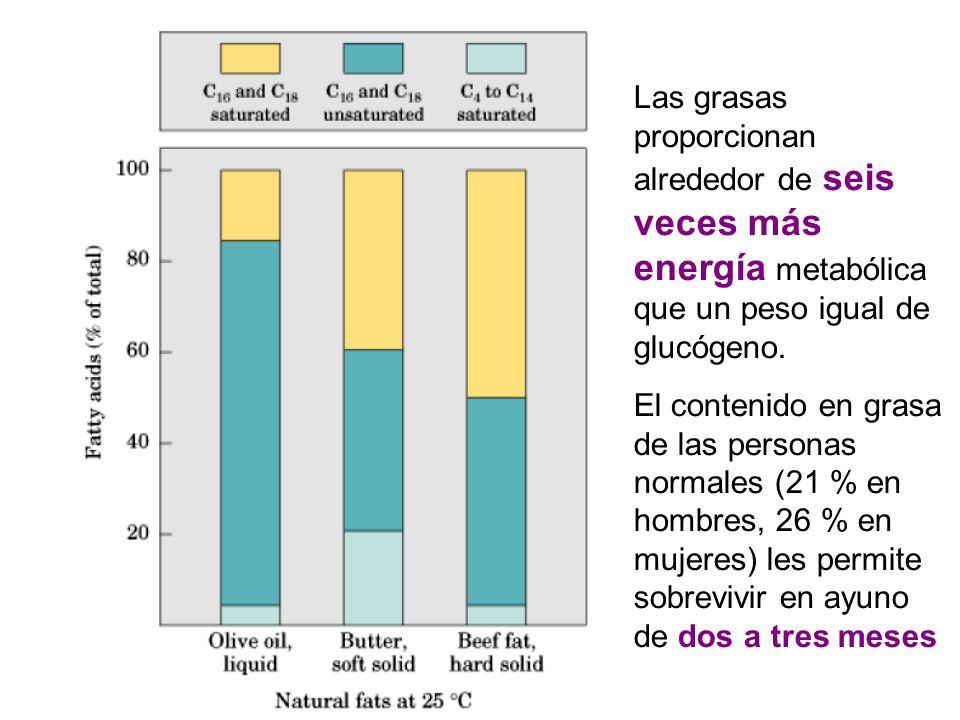 Las grasas proporcionan alrededor de seis veces más energía metabólica que un peso igual de glucógeno.
