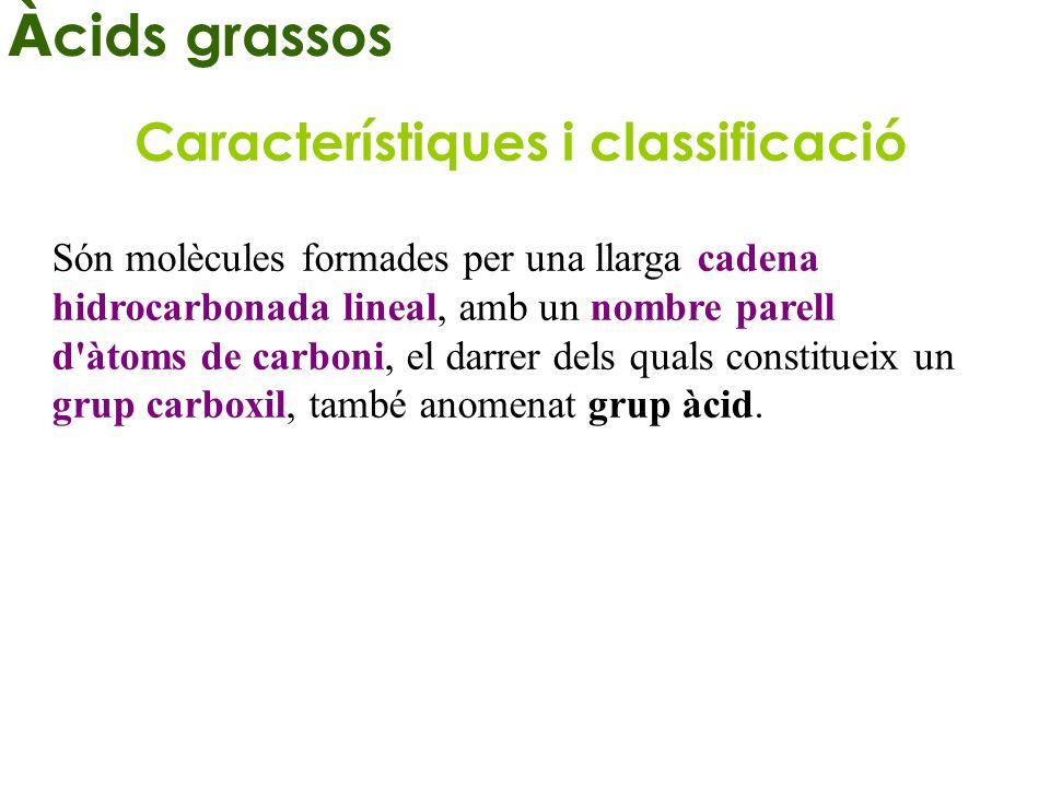 Àcids grassos Característiques i classificació