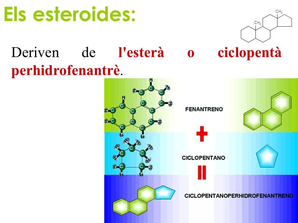 Els esteroides: CH3 Deriven de l esterà o ciclopentà perhidrofenantrè.