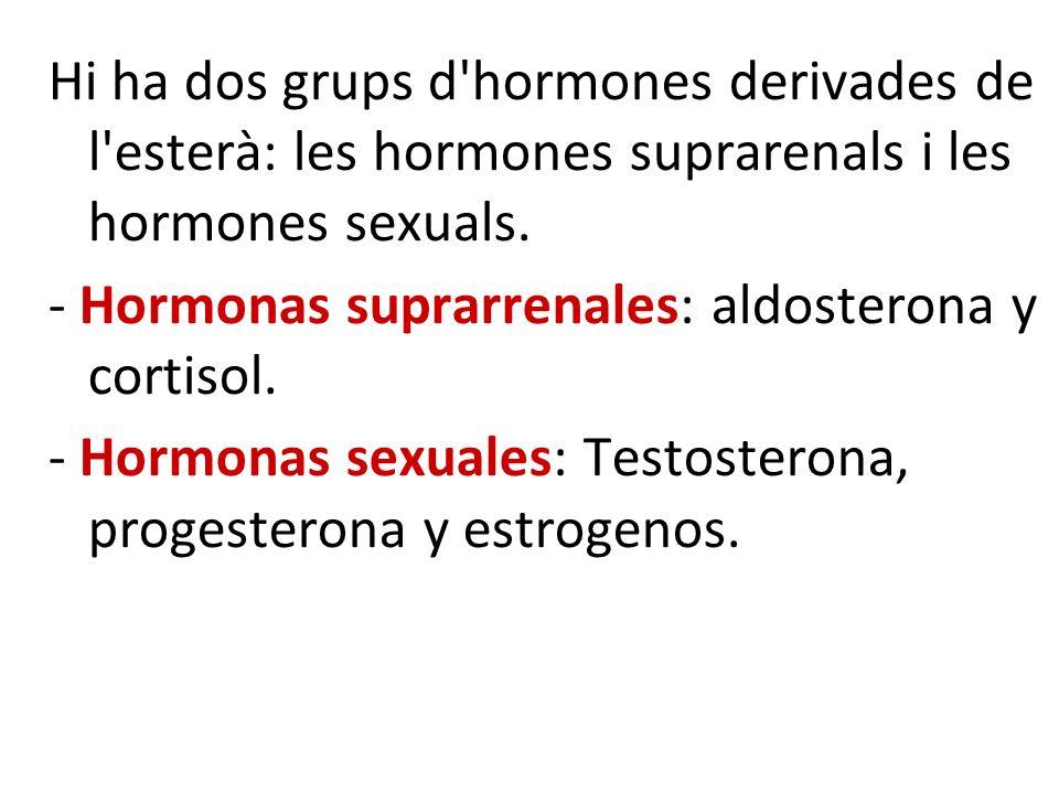 Hi ha dos grups d hormones derivades de l esterà: les hormones suprarenals i les hormones sexuals.