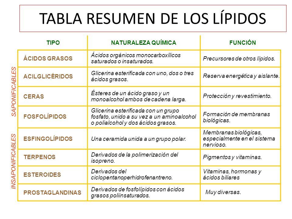 TABLA RESUMEN DE LOS LÍPIDOS