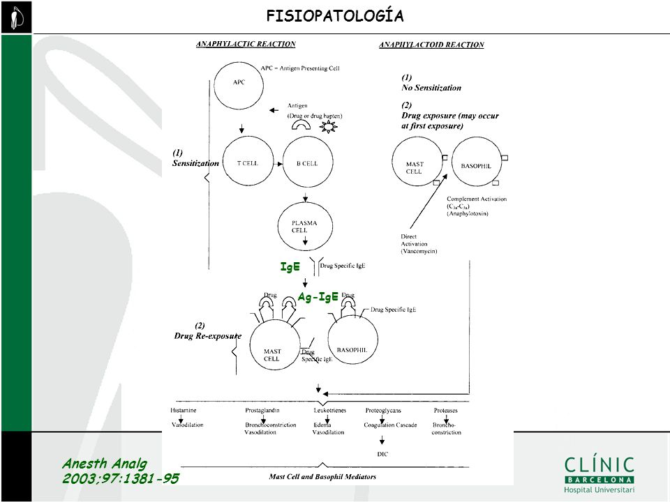 FISIOPATOLOGÍA IgE Ag-IgE Anesth Analg 2003;97:1381-95