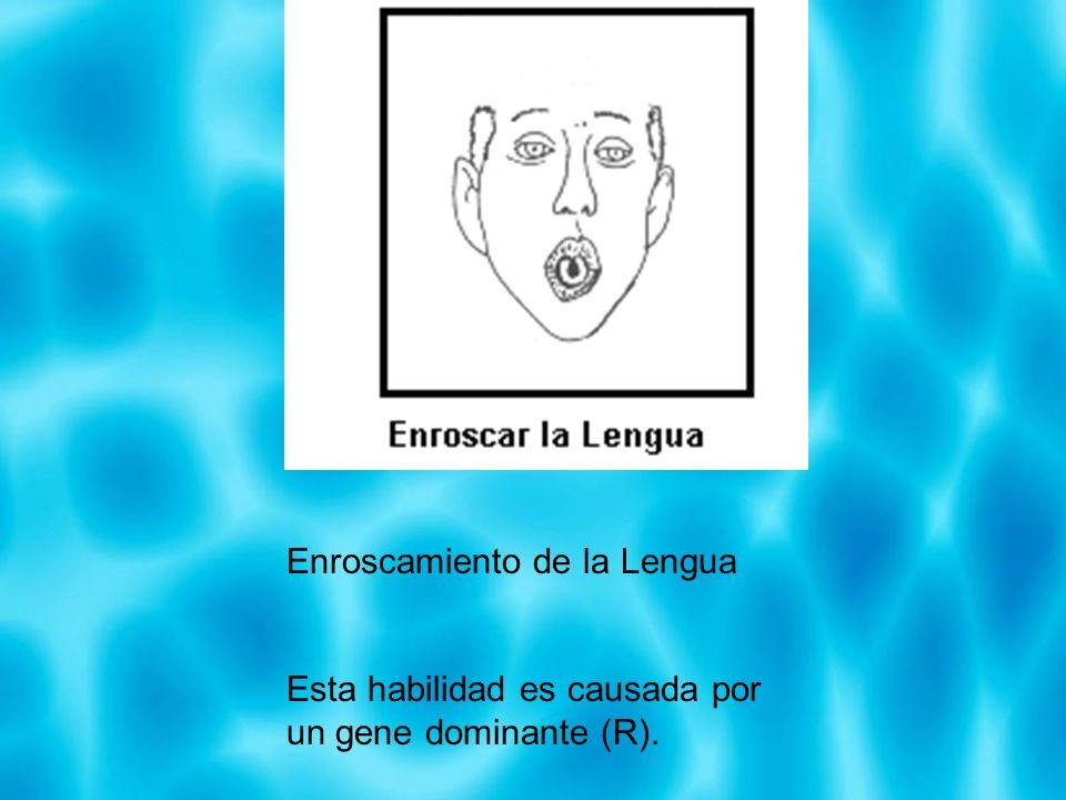 Enroscamiento de la Lengua