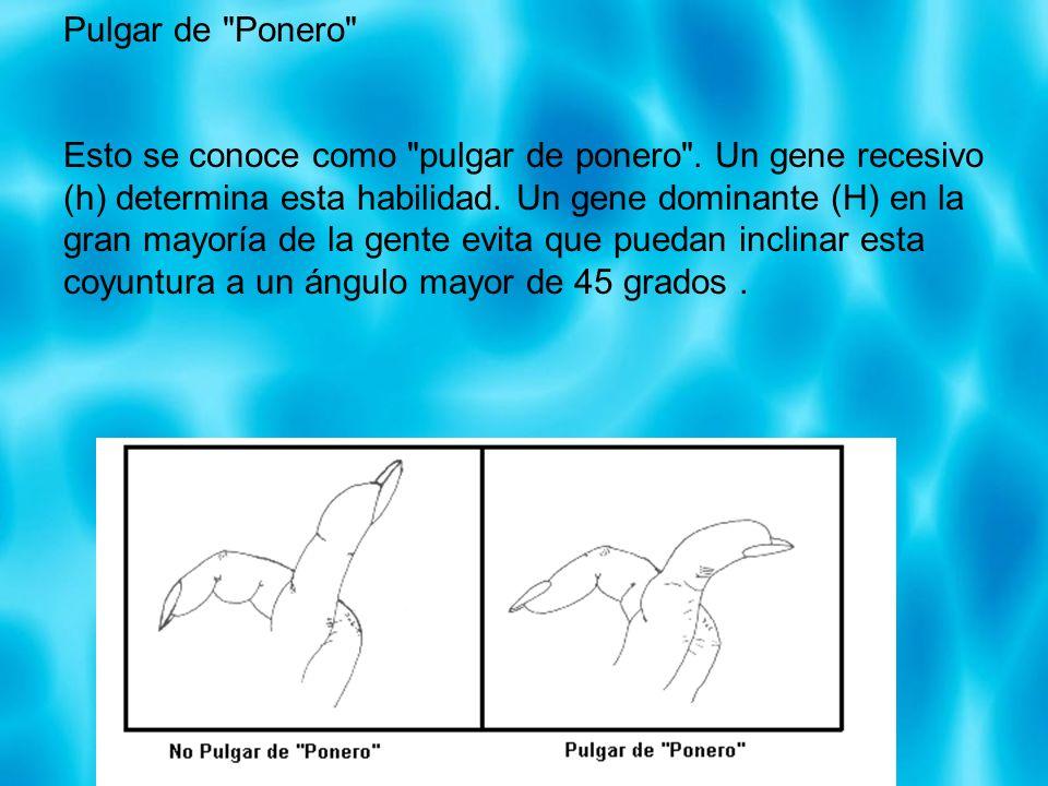 Pulgar de Ponero