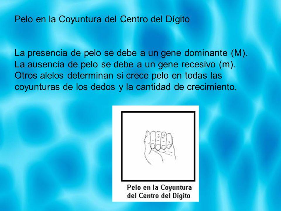 Pelo en la Coyuntura del Centro del Dígito