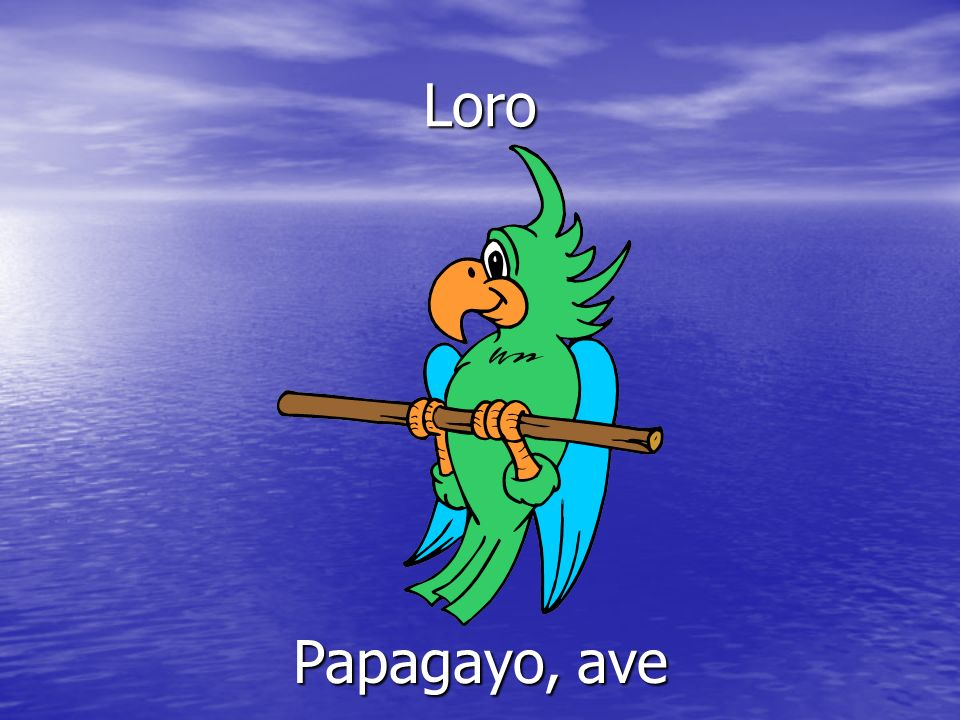 Loro Papagayo, ave