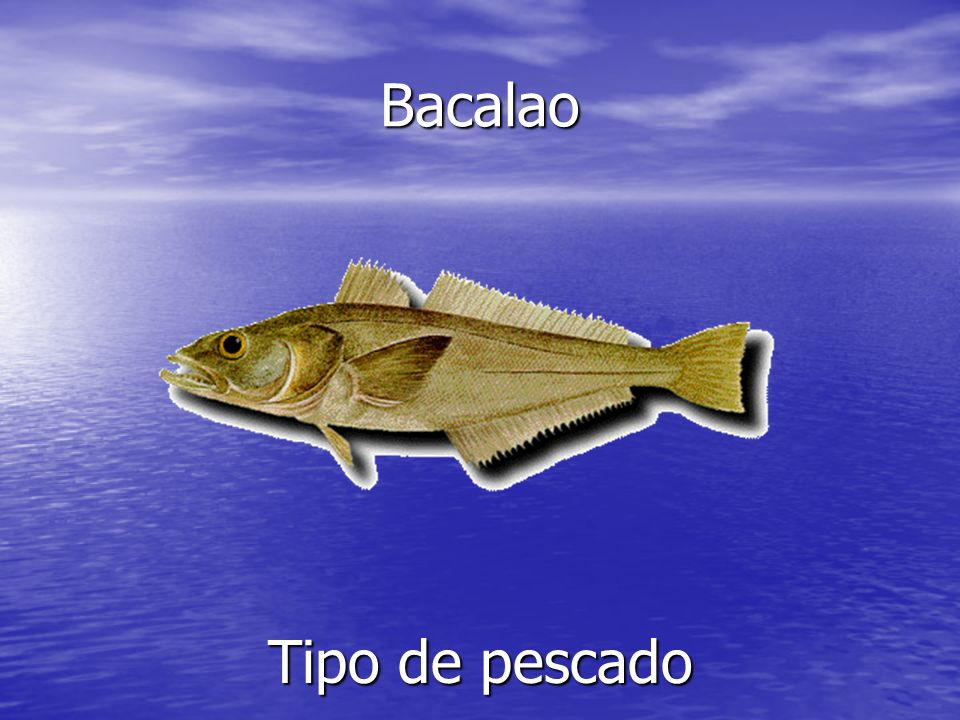 Bacalao Tipo de pescado