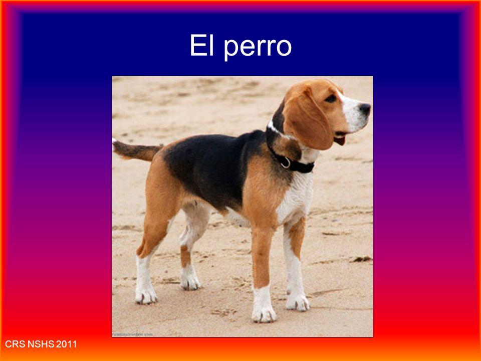El perro CRS NSHS 2011