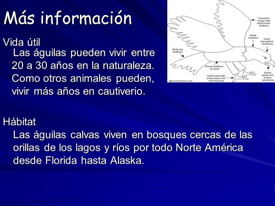 Más información Vida útil Las águilas pueden vivir entre