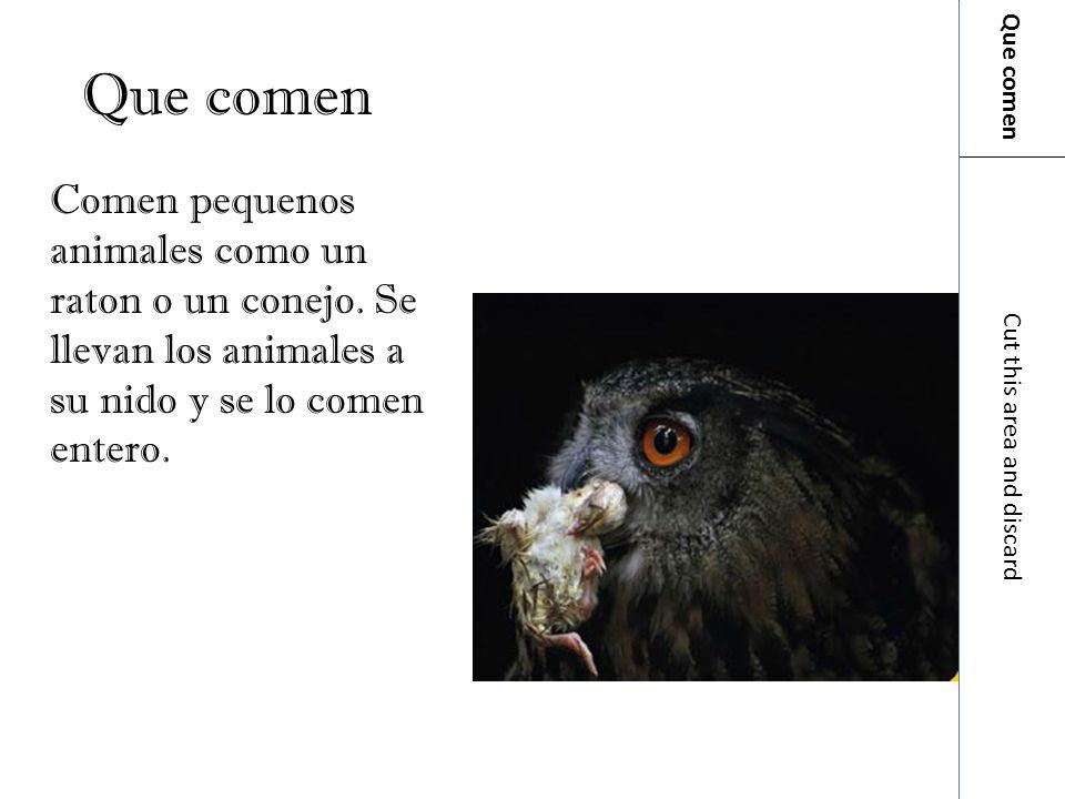Que comenQue comen. Comen pequenos animales como un raton o un conejo. Se llevan los animales a su nido y se lo comen entero.