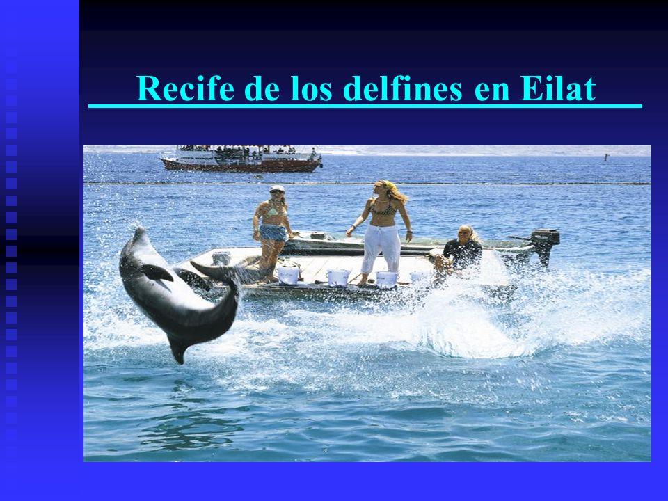 Recife de los delfines en Eilat
