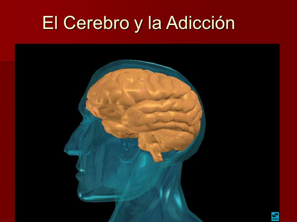 El Cerebro y la Adicción