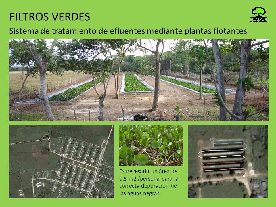 FILTROS VERDES Sistema de tratamiento de efluentes mediante plantas flotantes.