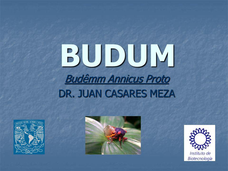 Budêmm Annicus Proto DR. JUAN CASARES MEZA