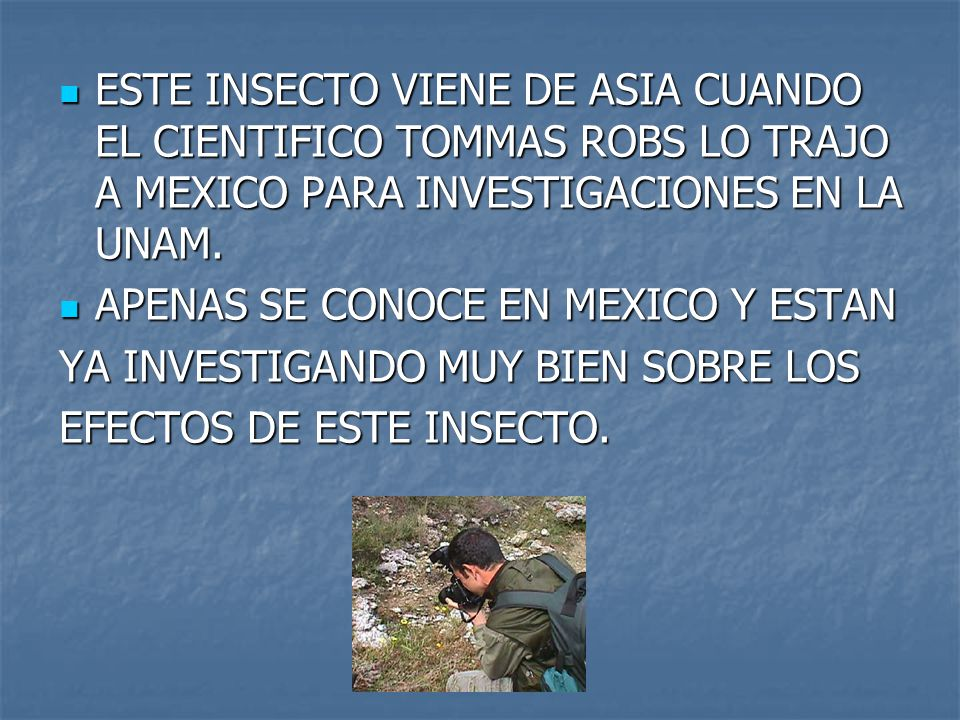 ESTE INSECTO VIENE DE ASIA CUANDO EL CIENTIFICO TOMMAS ROBS LO TRAJO A MEXICO PARA INVESTIGACIONES EN LA UNAM.