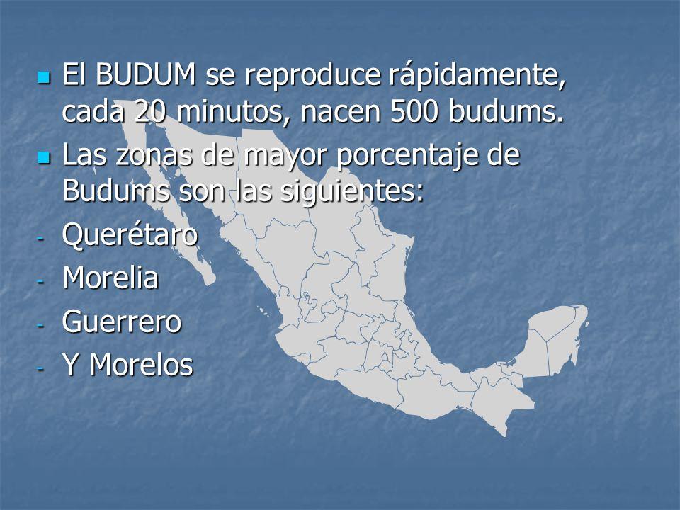 El BUDUM se reproduce rápidamente, cada 20 minutos, nacen 500 budums.