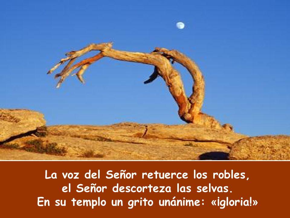 La voz del Señor retuerce los robles, el Señor descorteza las selvas
