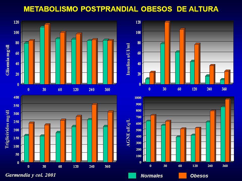 METABOLISMO POSTPRANDIAL OBESOS DE ALTURA