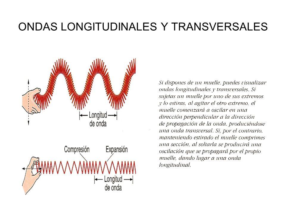 ONDAS LONGITUDINALES Y TRANSVERSALES