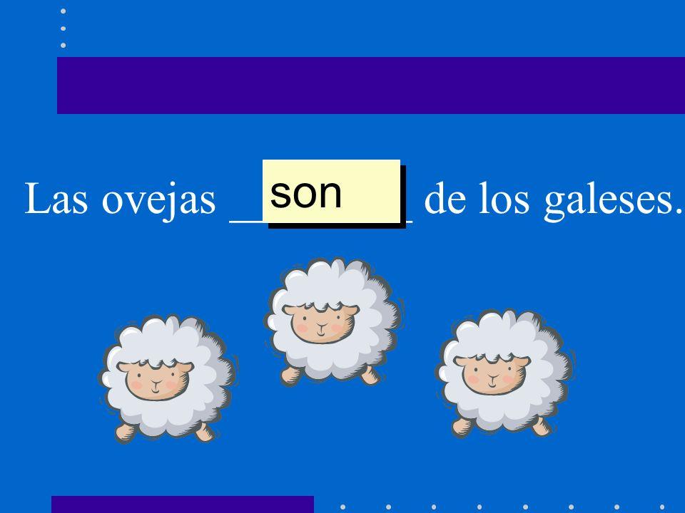 son Las ovejas ________ de los galeses.