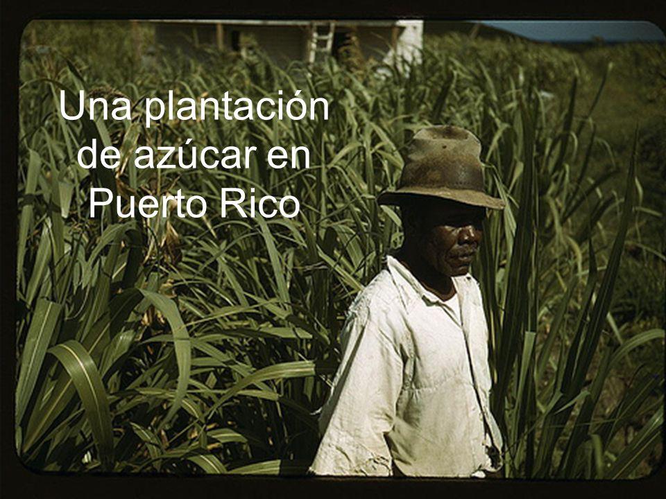 Una plantación de azúcar en Puerto Rico