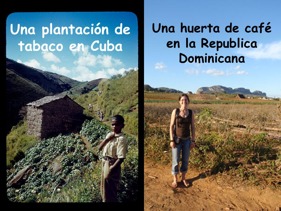 Una plantación de tabaco en Cuba