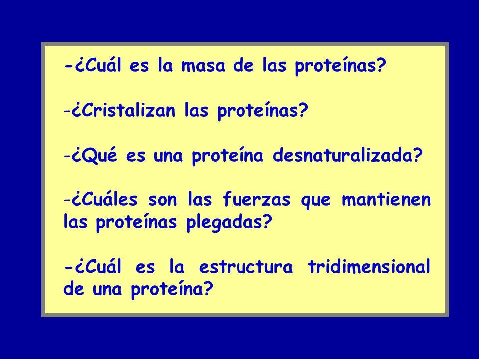 -¿Cuál es la masa de las proteínas
