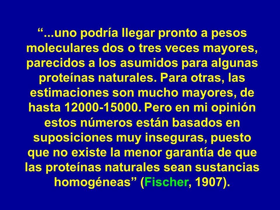 ...uno podría llegar pronto a pesos moleculares dos o tres veces mayores, parecidos a los asumidos para algunas proteínas naturales.