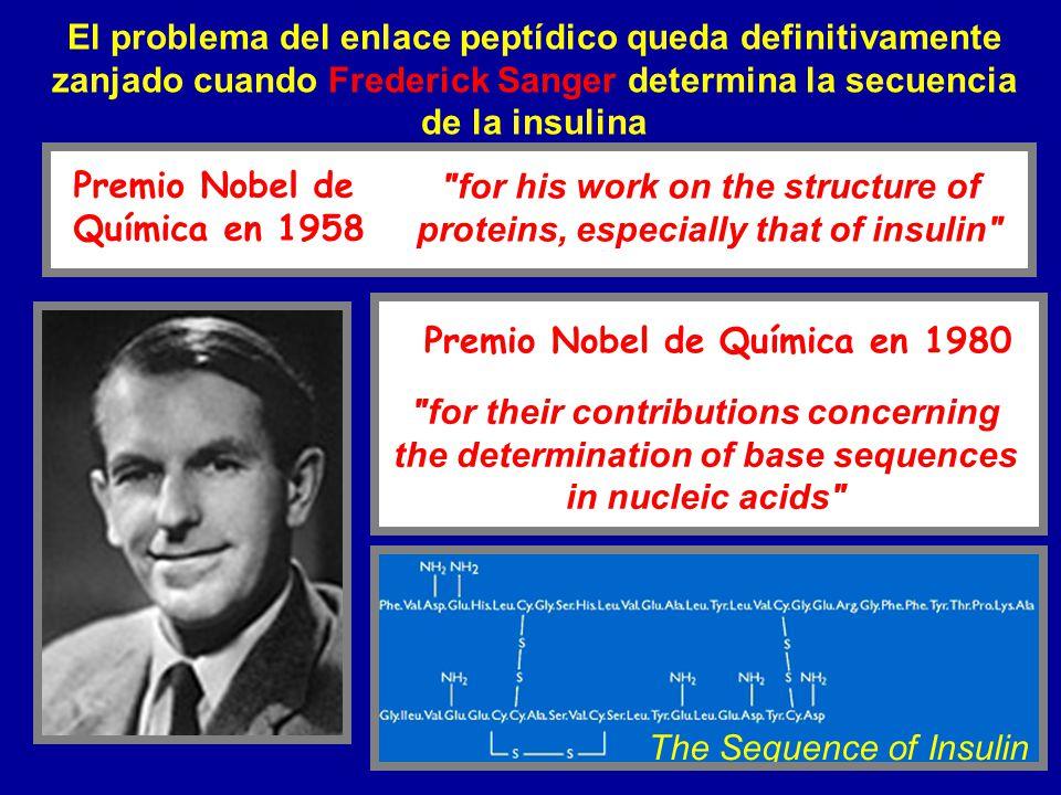 El problema del enlace peptídico queda definitivamente zanjado cuando Frederick Sanger determina la secuencia de la insulina