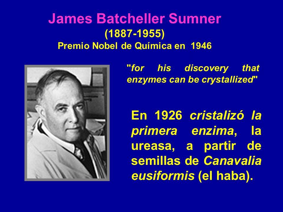 James Batcheller Sumner Premio Nobel de Química en 1946
