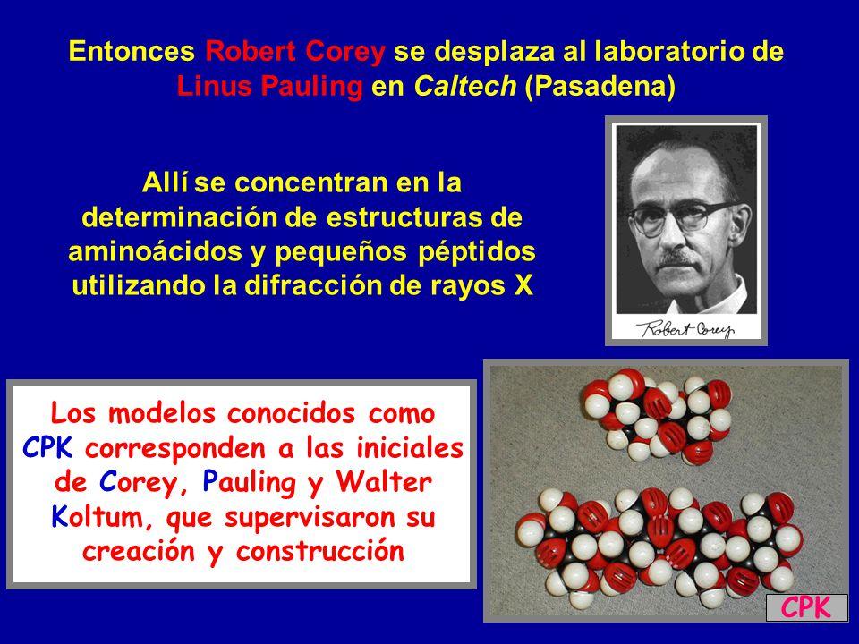 Entonces Robert Corey se desplaza al laboratorio de Linus Pauling en Caltech (Pasadena)