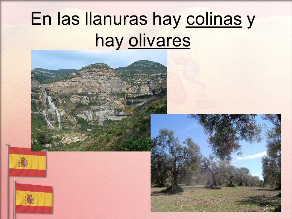 En las llanuras hay colinas y hay olivares
