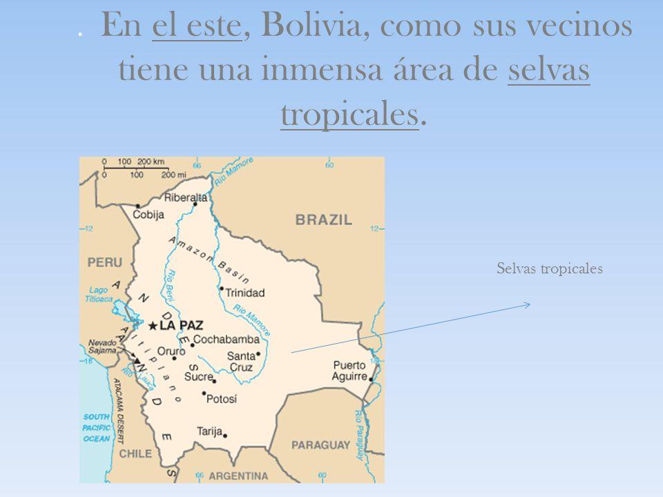 . En el este, Bolivia, como sus vecinos tiene una inmensa área de selvas tropicales.
