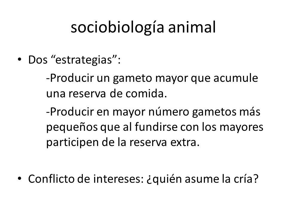 sociobiología animal Dos estrategias :