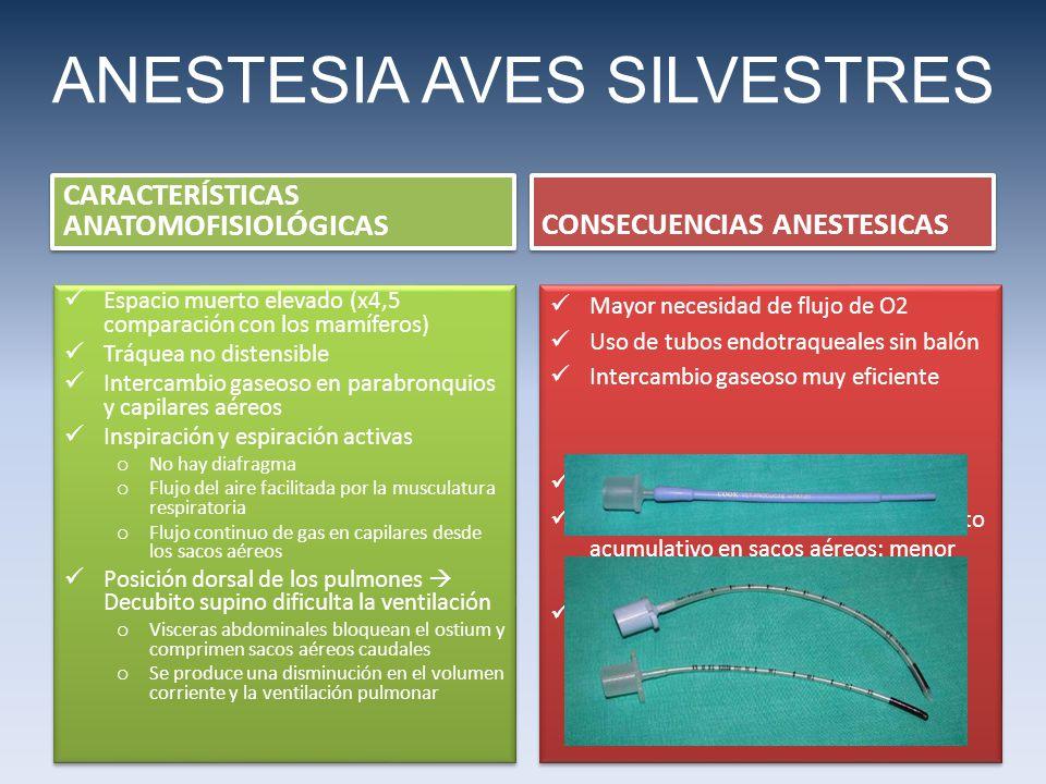 ANESTESIA AVES SILVESTRES