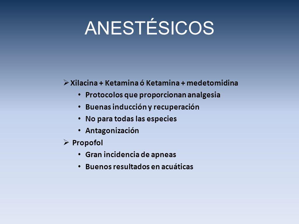 ANESTÉSICOS Xilacina + Ketamina ó Ketamina + medetomidina