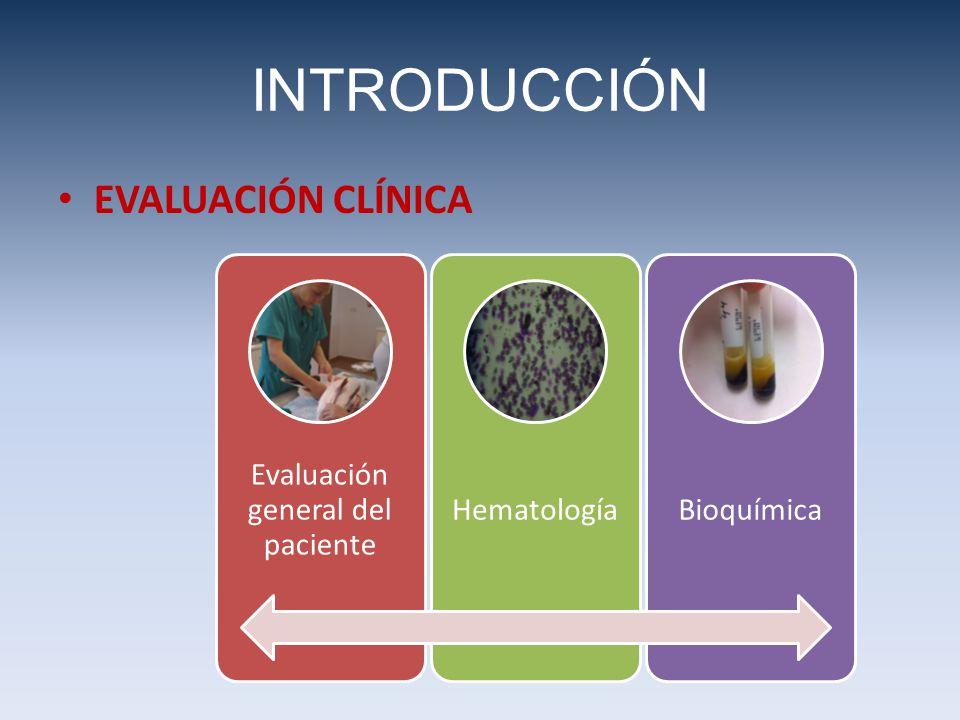Evaluación general del paciente