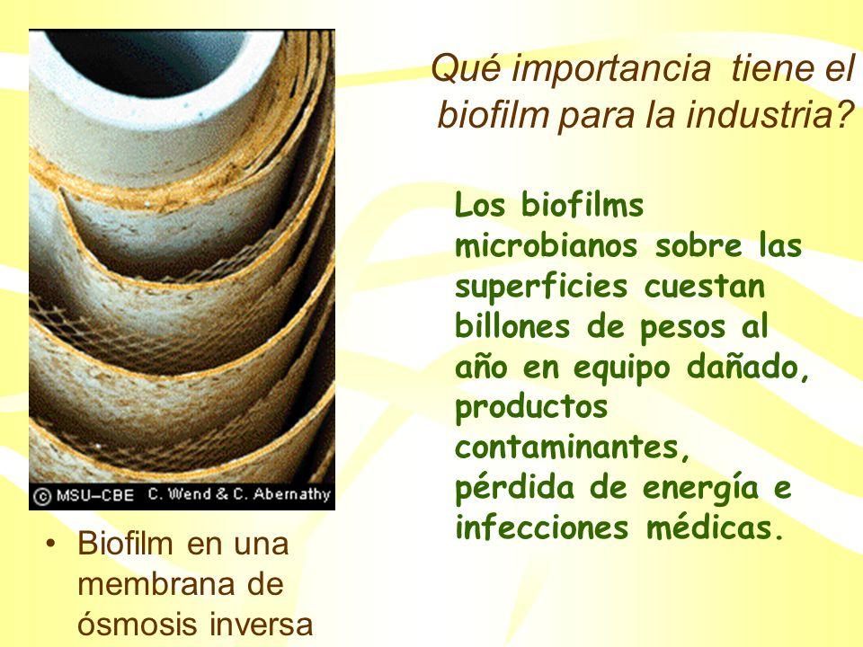 Qué importancia tiene el biofilm para la industria