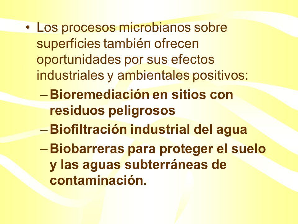 Los procesos microbianos sobre superficies también ofrecen oportunidades por sus efectos industriales y ambientales positivos: