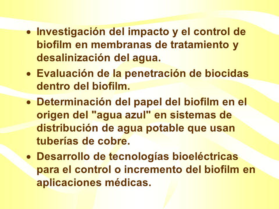 Investigación del impacto y el control de biofilm en membranas de tratamiento y desalinización del agua.