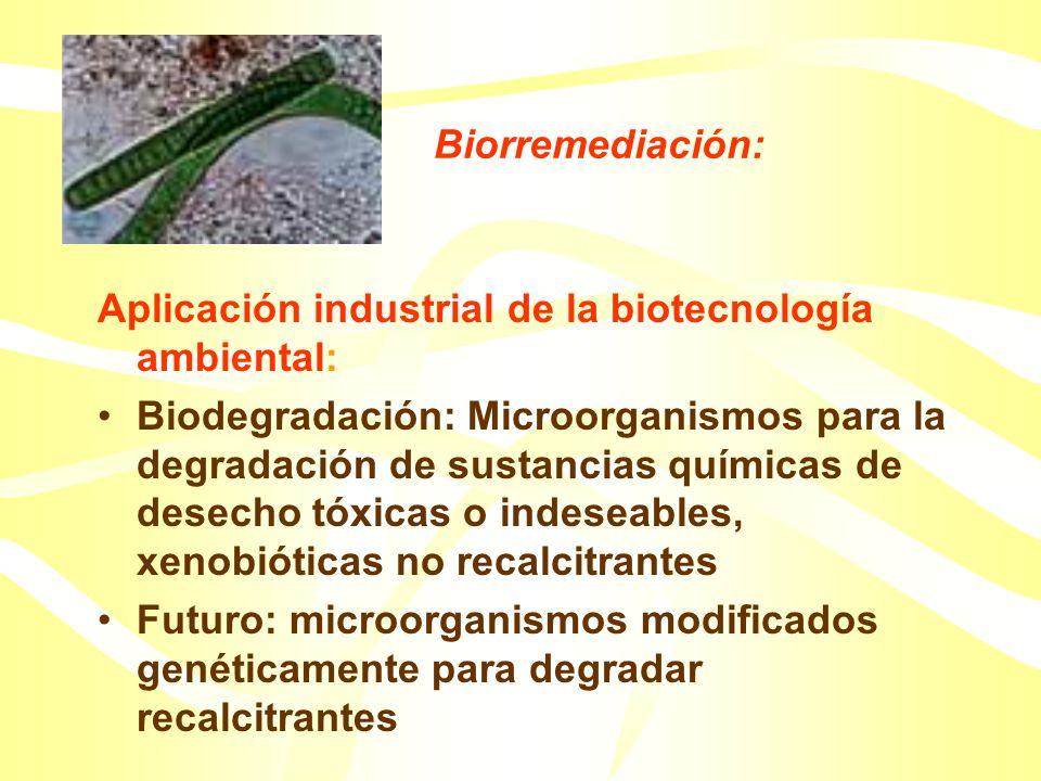 Biorremediación: Aplicación industrial de la biotecnología ambiental: