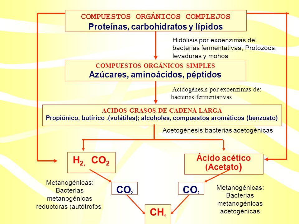 Azúcares, aminoácidos, péptidos