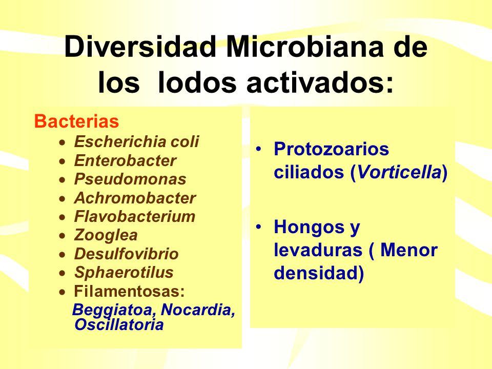 Diversidad Microbiana de los lodos activados: