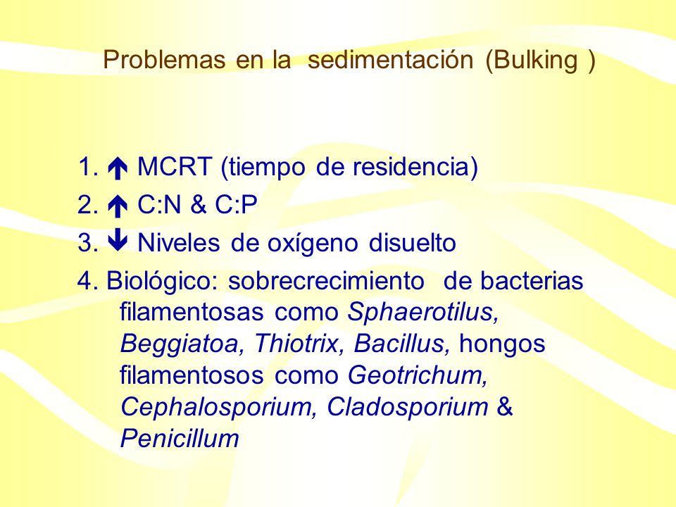 Problemas en la sedimentación (Bulking )