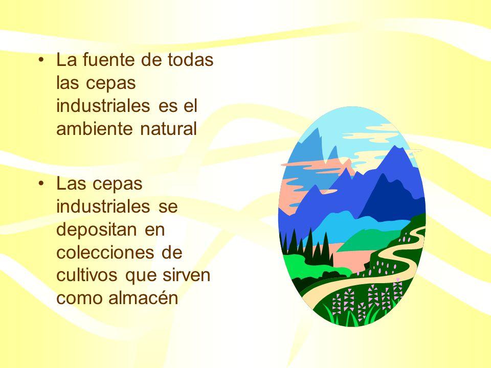 La fuente de todas las cepas industriales es el ambiente natural