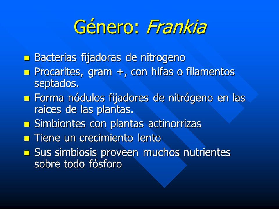 Género: Frankia Bacterias fijadoras de nitrogeno