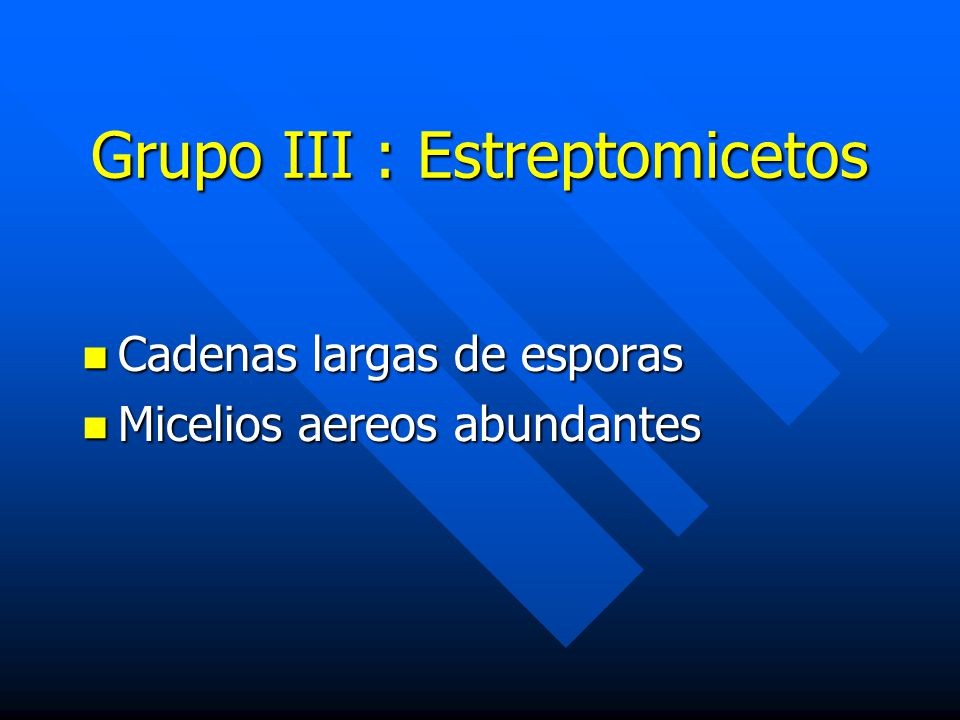 Grupo III : Estreptomicetos